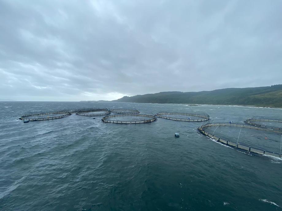 Mowis anlegg ved Carradale North slet seg fra fortøyningene under stormen Ellen i oktober. Hendelsen forårsaket rømming av nesten 49 000 laks med en gjennomsnittsvekt på mellom 4 og 5 kg. Foto: Mowi.