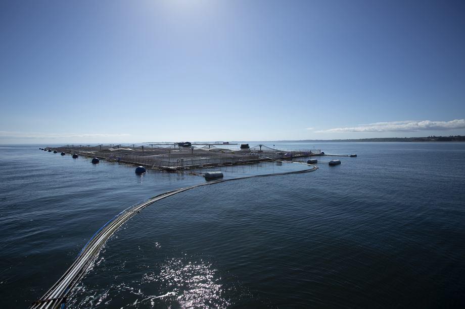 Salmones Austral experimentó un alza de 13,5% en las toneladas vendidas, respecto a igual período del año anterior. Foto: Salmones Austral.