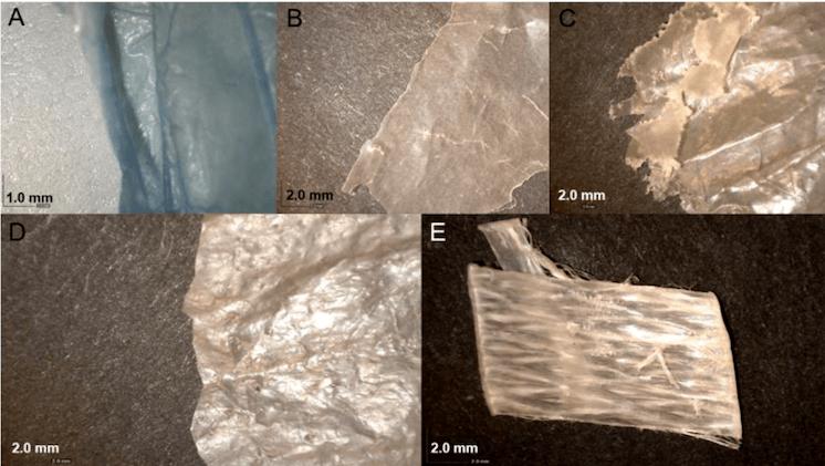 Algunas de las muestras de plásticos analizadas en el estudio. Foto: Radisic y col., 2020.