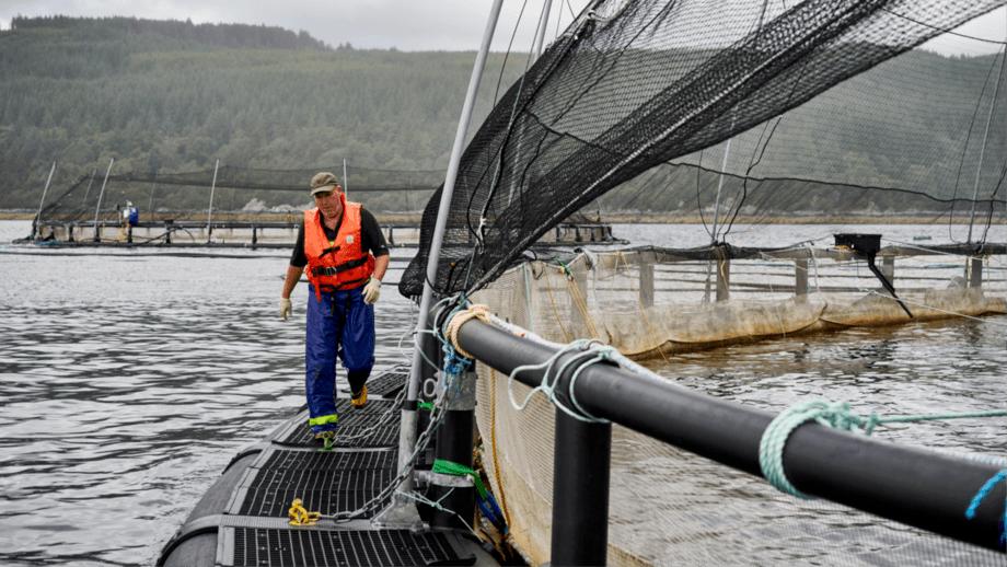 Un trabajador de Mowi inspecciona los amarres en la pasarela de una jaula en North Carradale. Foto: Mowi Escocia.