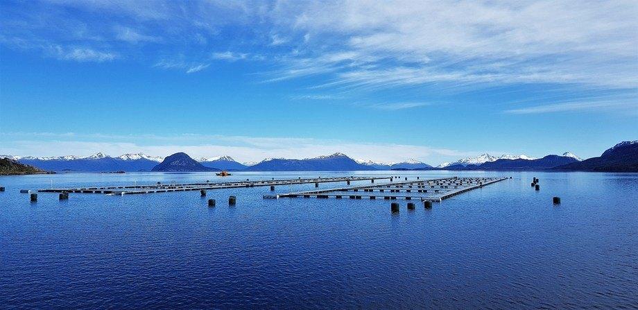 Centro de cultivo de salmón Isla Marta, de Blumar. Foto: Blumar.