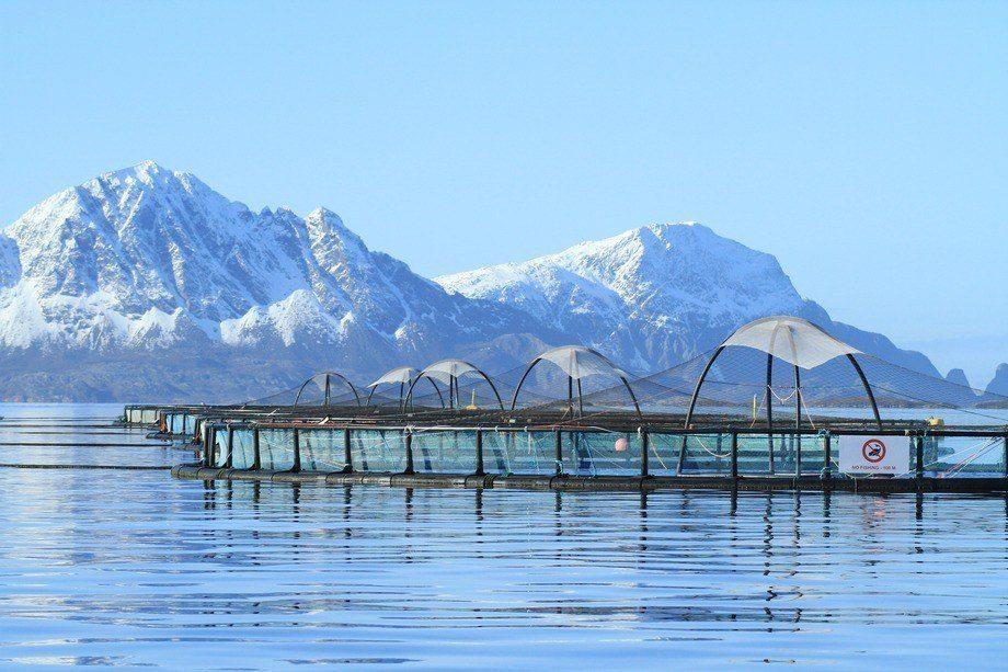 Kvarøy Arctic se caracteriza por mantener operaciones sustentables. Foto: Kvarøy Arctic.