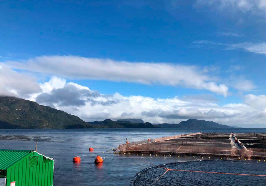 Centro de cultivo de Salmones de Chile. Foto: Salmones de Chile.