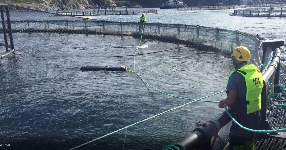 SeaNest har inngått stor avtale med Nova Sea. Oppdrettsselskapet sitt anlegg på Rødøy fikk levert SeaNest sine leppefiskskjul tilbake i 2018, og er nå ett av anleggene som utvider SeaNest-bruken ytterligere. Foto: Sea Nest.