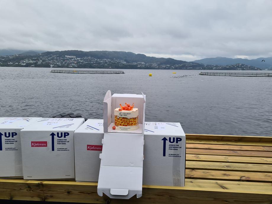 Her ligger rognkorn 100 millioner pent pakket i rognkasse da de ankom hos Blom Settefisk AS på Askøy i dag, 15.09.20. Foto: Benchmark,