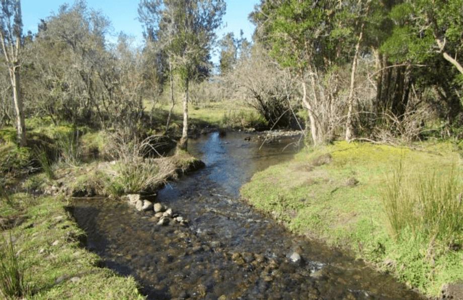 Río cercano a Humedal Huildad ha sido limpiado por la empresa con apoyo de la comunidad. Foto: Fiordo Austral.
