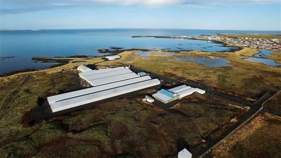Stofnfiskurs anlegg på Island henter vann, både saltvann og ferskvann, fra borehull i lavasteinen. Dermed er det fritt for laksepatogener. Bildet er av stamfiskanlegget ved Vogar, beliggende mellom flyplassen Keflarvik og hovedstaden Reykjarvik. Foto: Stofnfiskur.
