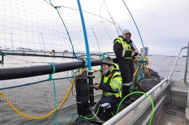 Trabajos de campo de nuevo sistema de conteo automático de piojos. Foto: Ecotone.