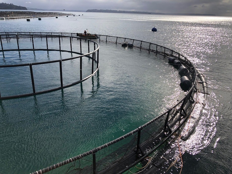 Primera balsa jaula sumergible para acuicultura oceánica en Chile. Foto: EcoSea Farming SpA.