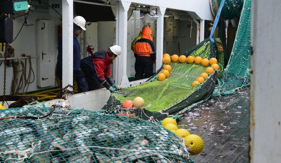 Trålhal under forskingstokt i Barentshavet. Toktaktivitet er ein viktig innsatsfaktor i havforvaltinga som skal bidra til eit berekraftig fiskeri i Noreg.  Foto: Kjartan Mæstad / Havforskingsinstituttet