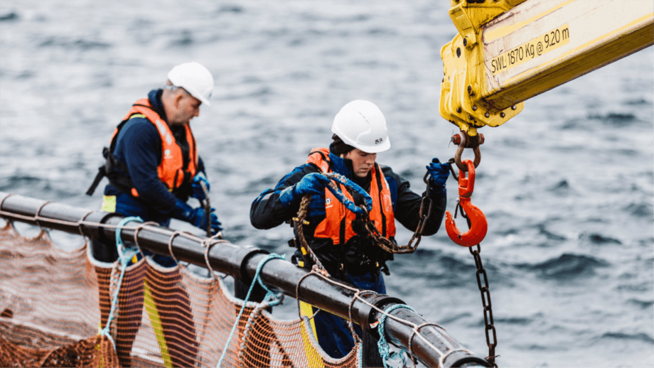 Scottish Sea Farms staff at work in Orkney prior to the pandemic. Marine Scotland wants to know how Covid-19 affected financial and operational performance in aquaculture, fisheries and recreational fisheries. Photo: SSF.