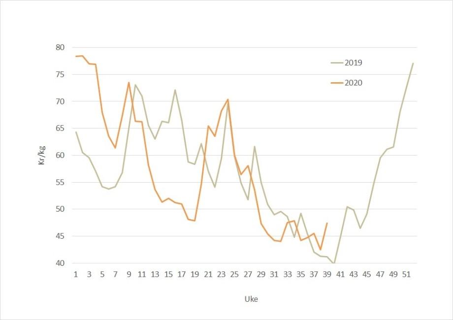 The salmon spot price (orange line) is higher than the same week last year (grey line). Data source: Akvafakta.