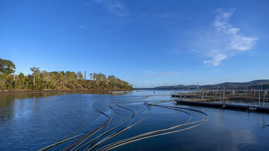 A Petuna salmon farm. Australia's waters are getting warmer, causing problems for salmon farmers in summer. Photo: Petuna.