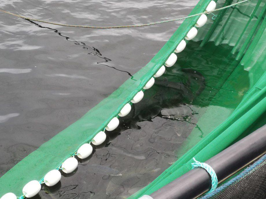 Den nye noten er en finmasket not som skal fangeopp lus under trenging av laks og ørret. Foto: OK Marine