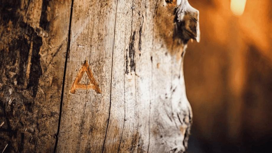 Se ha demostrado que la tecnología de madera para alimentación de Arbiom funciona sin problemas y de forma continua. Foto: Arbiom.