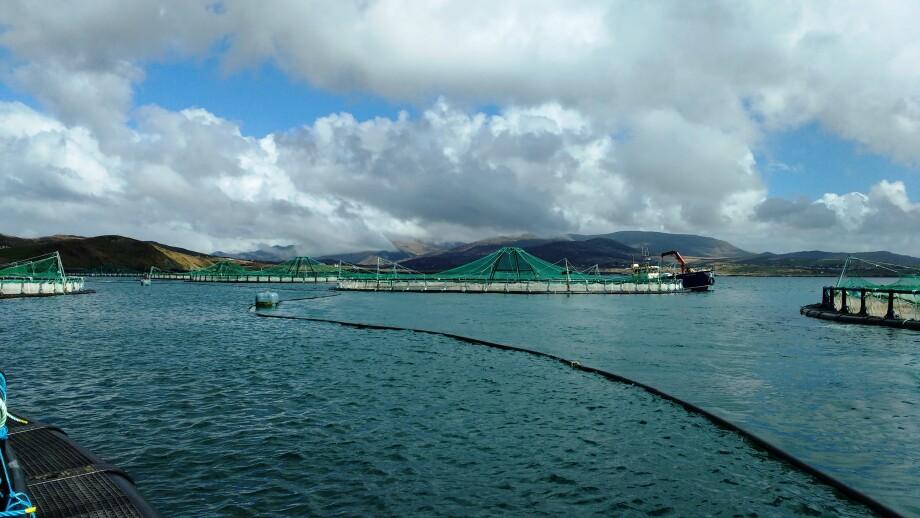 Mowi's Inishfanard organic salmon farm in Ireland. The Irish operation delivered the best EBIT per kilo in Q3. Photo: Mowi.