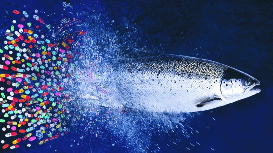 Imagen: Salmonexpert.
