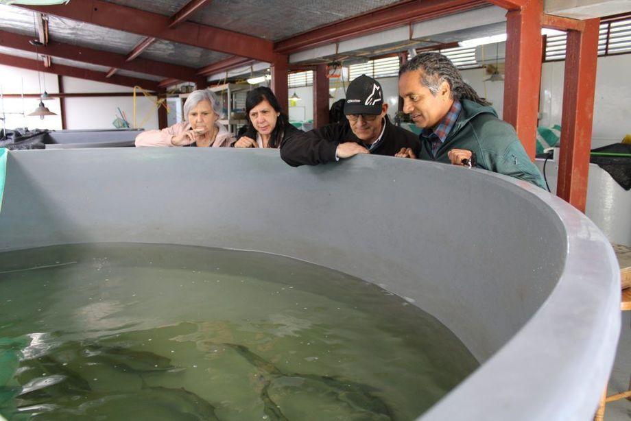 Sunil Kadri mener at moderne og nyskapende teknologi er ferd med å forandre havbruksindustrien, og at fiskens adferd vil bli et stadig viktigere tema for forskerne framover. Bildet viser (f.v.) Carmen Gallo, Ana Strappini, Sunil Kadri og Ricardo Enriquez.  Foto: Cageeye.