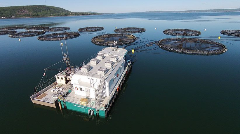 A Cooke Aquaculture salmon farm at Rattling Beach, Nova Scotia. The company's plans for more pens in the province have been with officials for two years. Photo: Cooke Aquaculture.