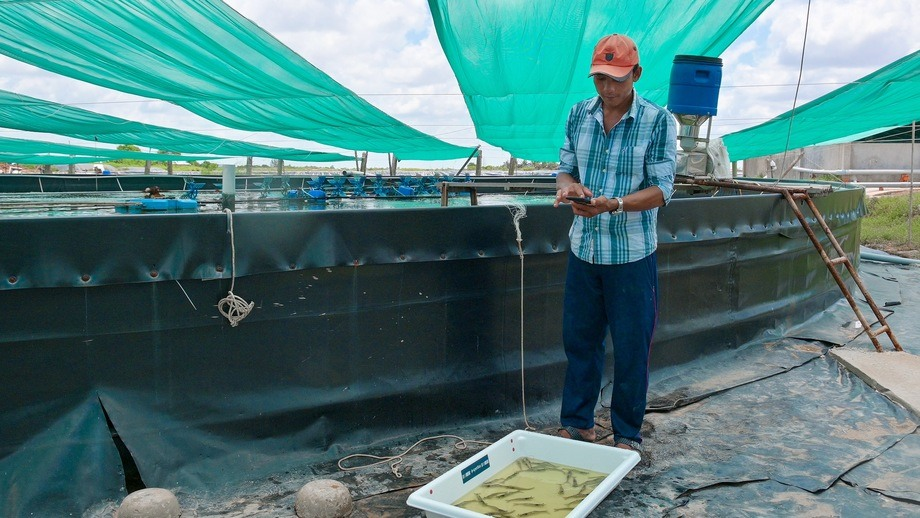 A Vietnamese shrimp farmer uses the app. Photo: XpertSea.