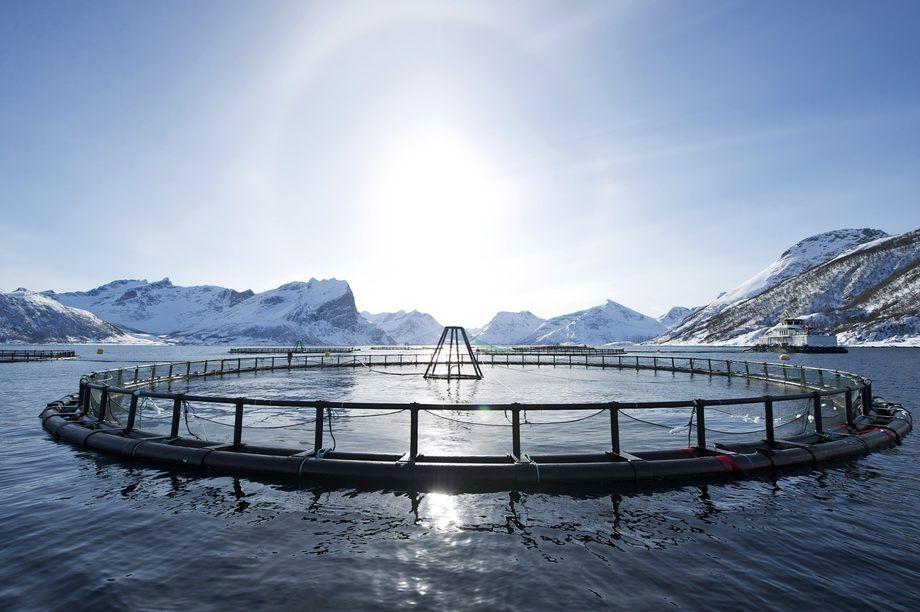 Selskapets styre har besluttet å utsette børsnoteringsprosessen. Foto: Norsk Sjømat