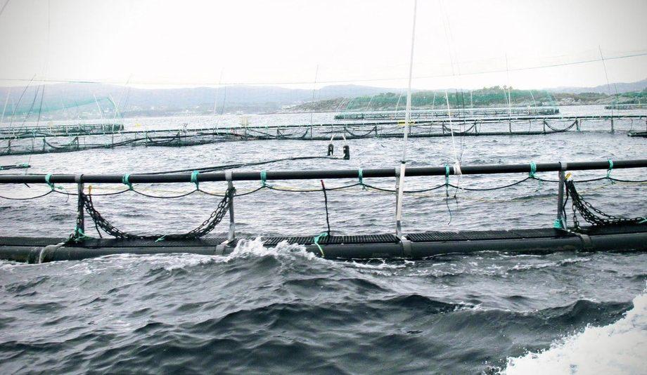 Oppdrettsanlegg (illustrasjonsfoto)  Foto: Beate Hoddevik/Havforskningsinstituttet