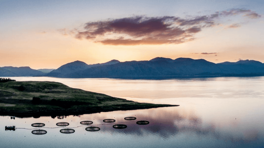 An aerial view of a salmon farm by Appin in the west Highlands. Photo: SAIC.