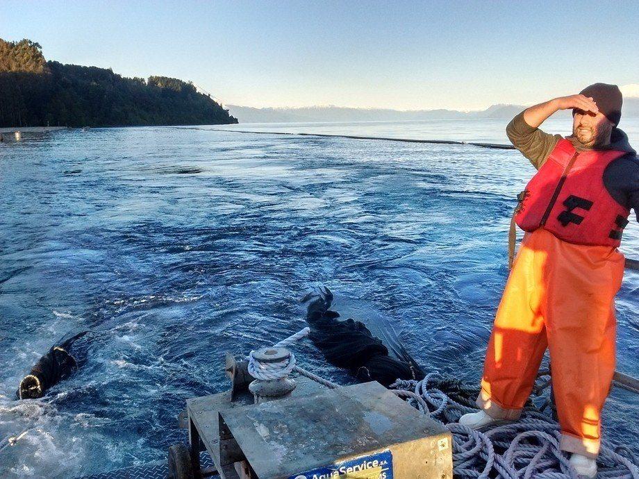 Propuesta de Subpesca plantea realizar esmoltificación en lagos, ríos y estuarios. Foto: Archivo Salmonexpert.