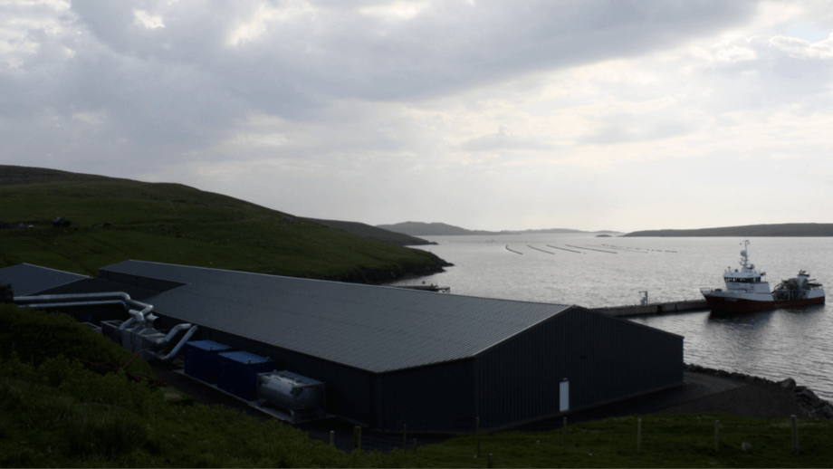 Grieg Seafood Shetland's Girlsta hatchery. The Norwegian company intends to sell its Scottish operations.