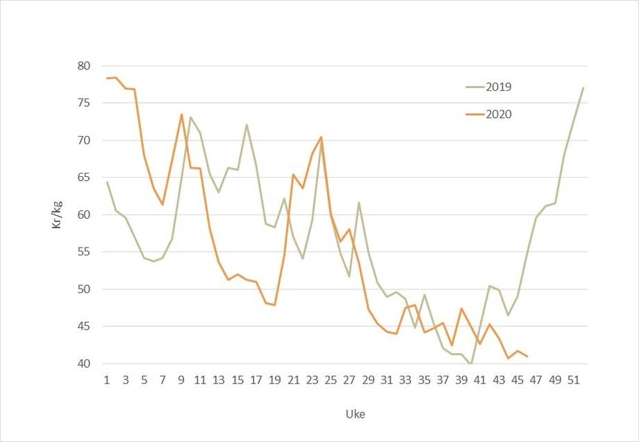 The salmon price (orange line) has not yet taken the upward trajectory seen last year (grey line) and in previous years.