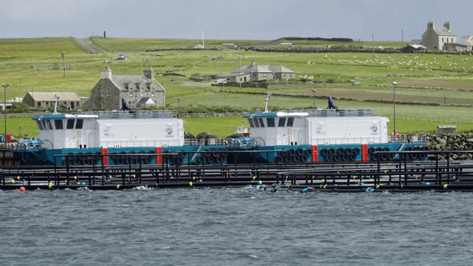 Cooke Scotland feed barges in Shetland. The company made a post-tax profit of £32.67m on turnover of £169.3m last year. Photo: Cooke.