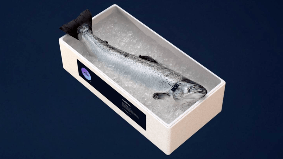 Lerøy's Aurora salmon, fed on algal oil, is now available online in the US. Photo: Lerøy.