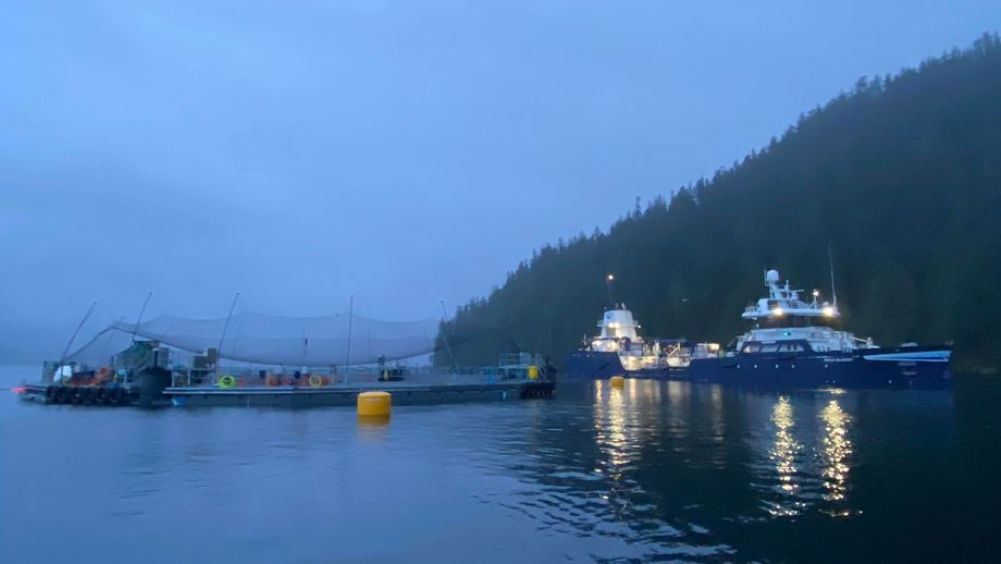 Fish being stocked in Cermaq's semi-closed containment system in Clayoquot Sound, Vancouver Island, last December. The company has been given $752,000 towards the cost of the system. Photo: Cermaq Canada.