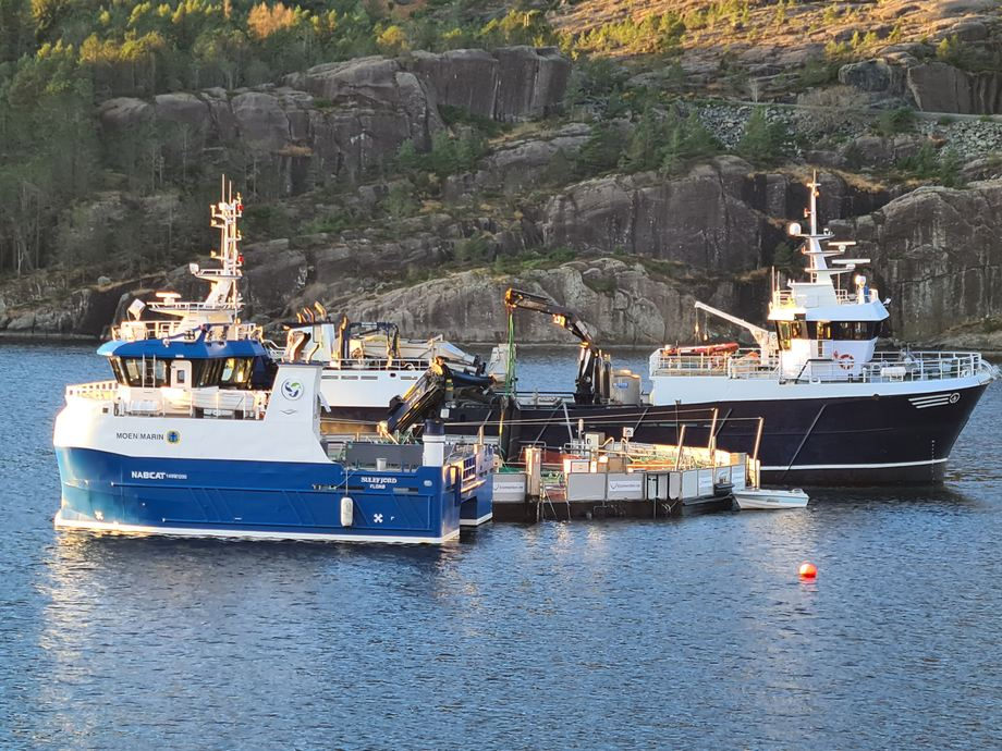 Sulefjord og Mowi Star ved Ecomerden. Smoltmottak 11 desember. Foto: Sissel Kråkås, kvalitetsleder Sulefisk.