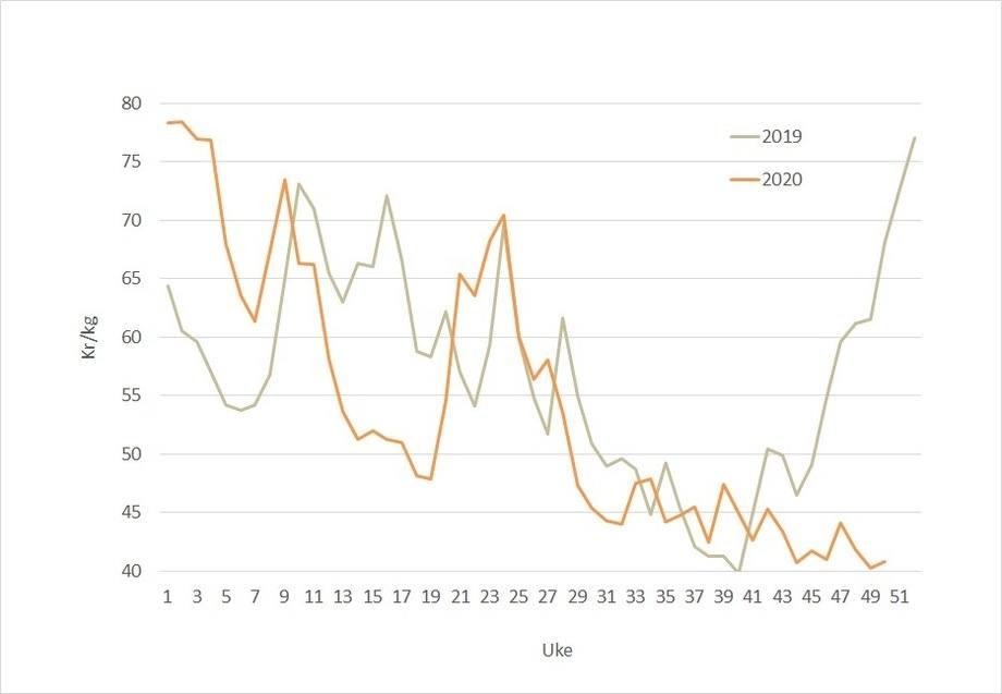 The spot price for Norwegian salmon in 2020 (orange) against 2019 (grey). Data source: Akvafakta