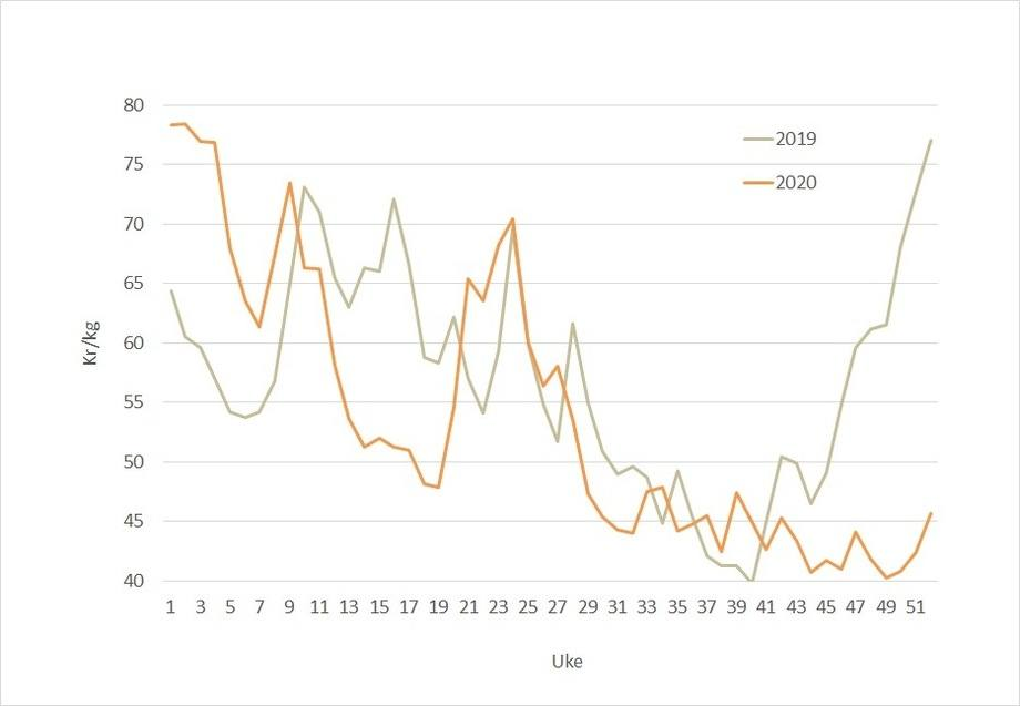 The salmon spot price in 2019 (grey line) and 2020 (orange line). This year's spot price is expected to rise but not immediately.