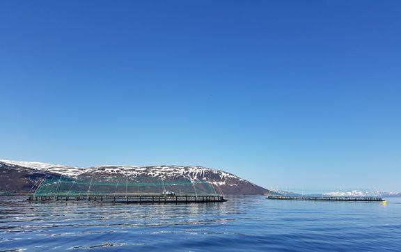 ABB elektrifiserer arbeidsbåt for en av verdens første oppdrettsanlegg for torsk. Foto: Norcod.