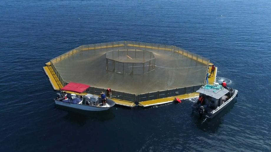 Innovasea's Evolution pen, designed for open ocean use. Rule changes will allow a quicker permitting process for off fish farms in the US. Photo: Innovasea