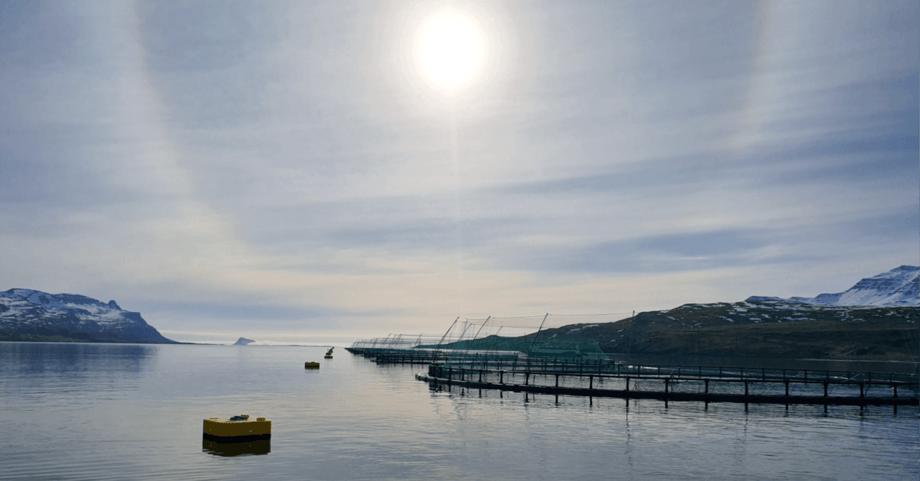 The new locality Fagraeyri in Fáskrúðsfjörður, where Ice Fish Farm has produced salmon without handling the fish. Photo: Ice Fish Farm