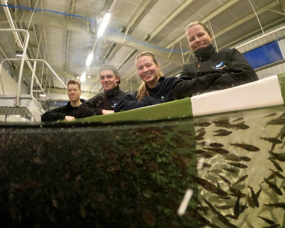 Fra venstre Håvard Frøyen, Håvard Brandsøy, Henriette Helle og Hanne Sveen foran siste kar med torskeyngel klare til levering. Foto: Eivind Hauge.