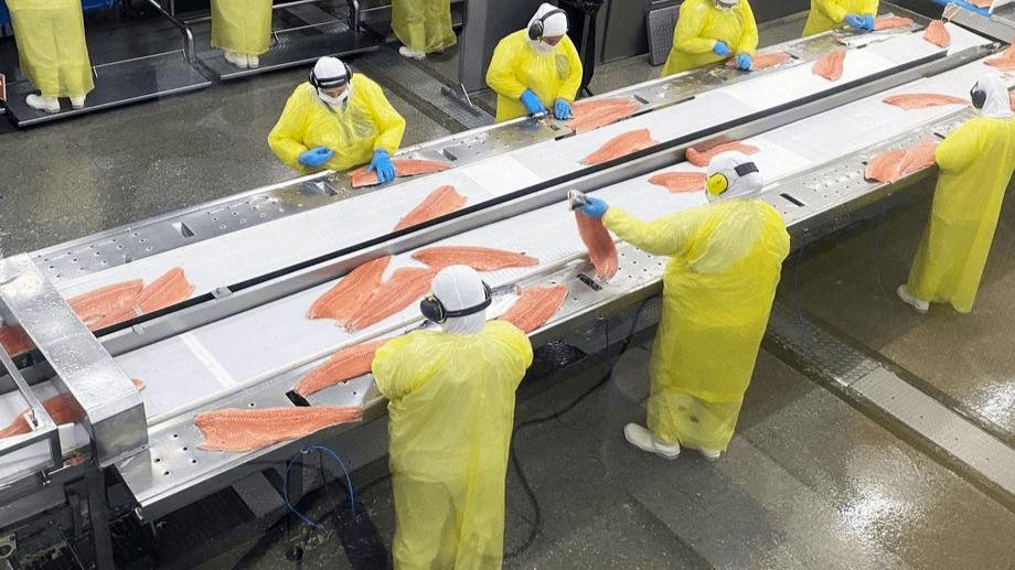 Planta de proceso de Salmones Austral. Foto: Salmones Austral.