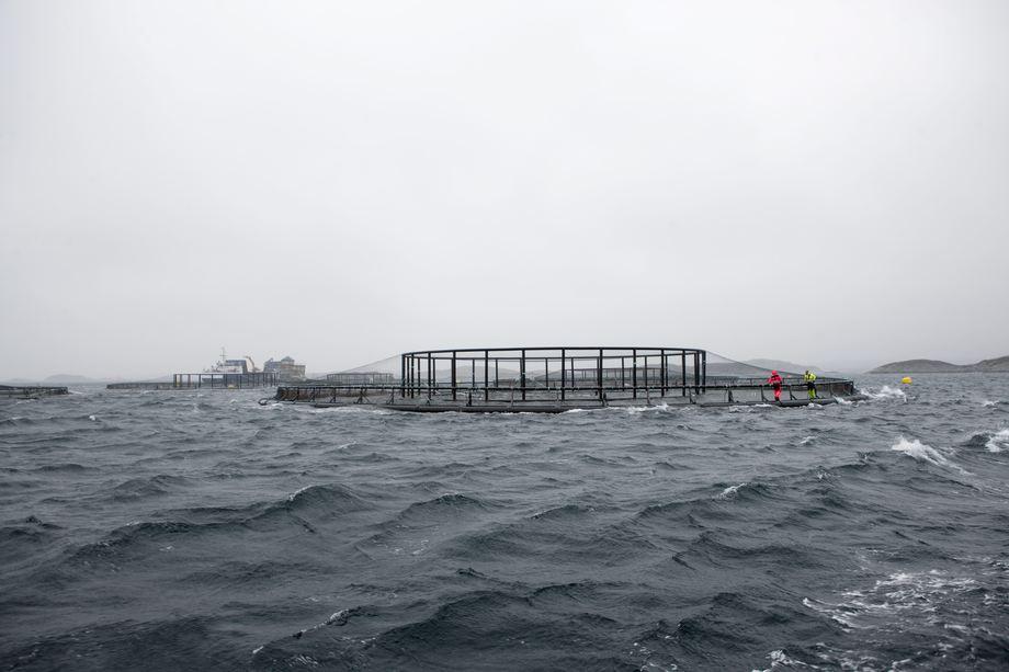 Samspill mellom fartøy og merd i hardt vær, nye oppdrettskonstruksjoner og større skip er eksempler på hva som kan være krevende fartøysoperasjoner. Foto: SINTEF / Geir Mogen