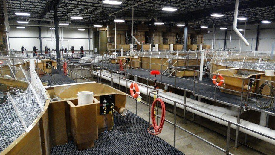Centro de AquaBounty en Indiana. Foto: AquaBounty.
