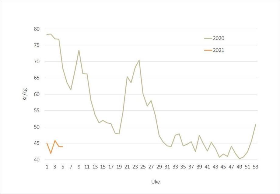 Spot price for salmon in 2021 (orange) against 2020 (grey). Data source: Akvafakta.