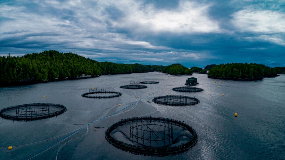 Centro de cultivo de salmón de Mowi en Columbia Británica. Foto: Archivo Salmonexpert.