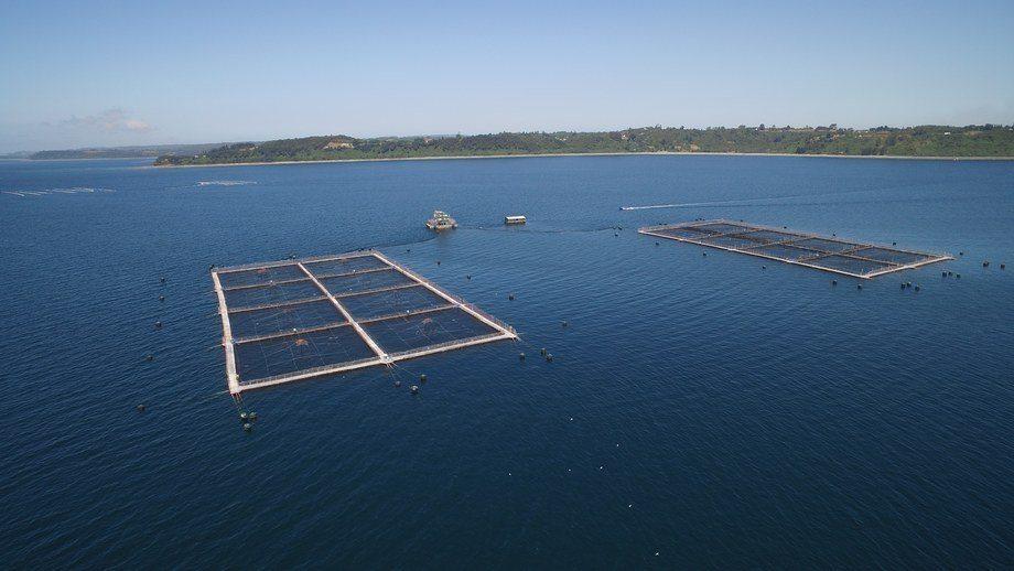 Konectiva está abordando solución relacionada al deterioro de las jaulas en centros de salmón. Foto: Archivo Salmonexpert.