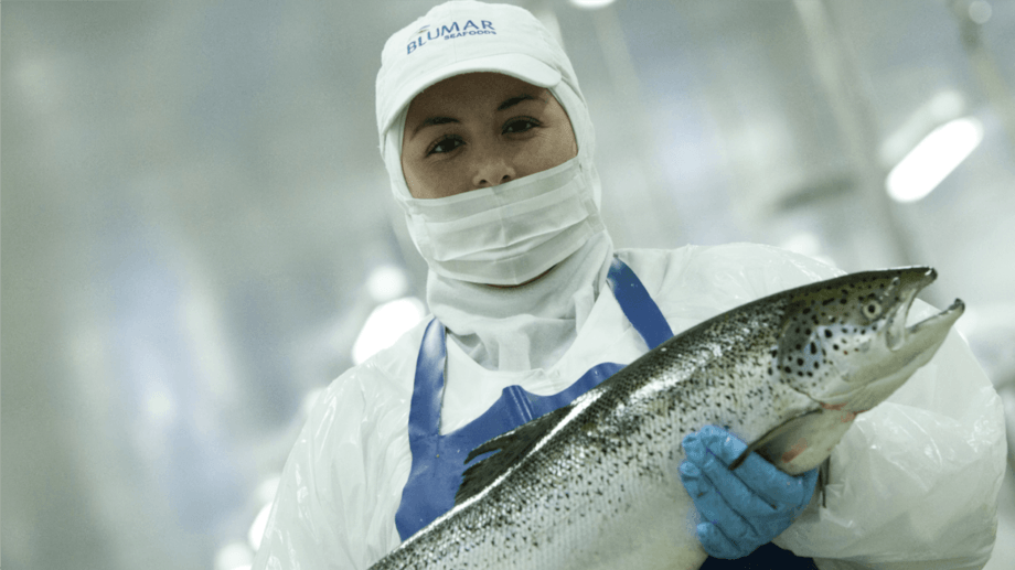 Blumar's share value has increased along with the price of Chilean salmon. Photo: Blumar.