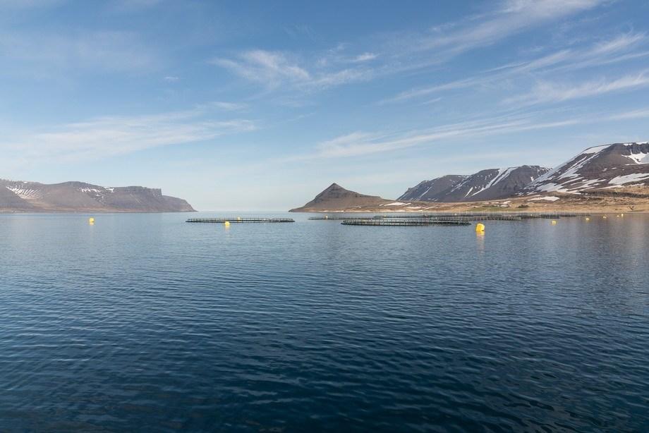 Her er en av Arctic Fish sine lokaliteter i vestfjorden på Island. Foto: August Atlason