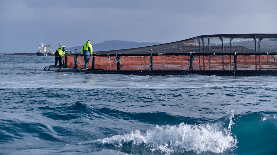 A salmon farm near Skye. Prior to the end of the Brexit transition period, salmon could be harvested in the early hours of one day and be in Boulogne the next. Photo: SSPO.