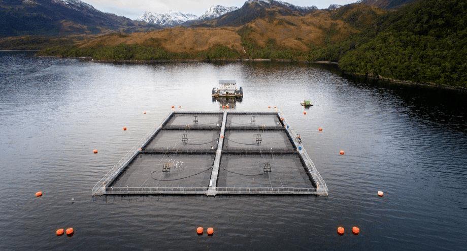 Foto: Asociación de Salmonicultores de Magallanes.